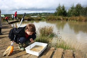 Pond dipping at Roadford Lake