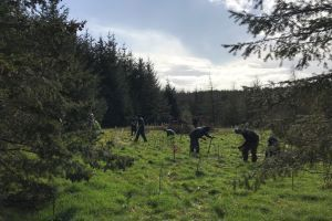 Tree planting at Roadford Lake