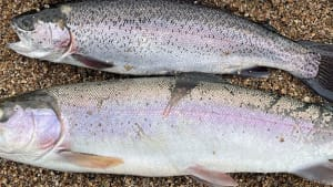 South West Lakes Trout Fisheries Report - February 2021