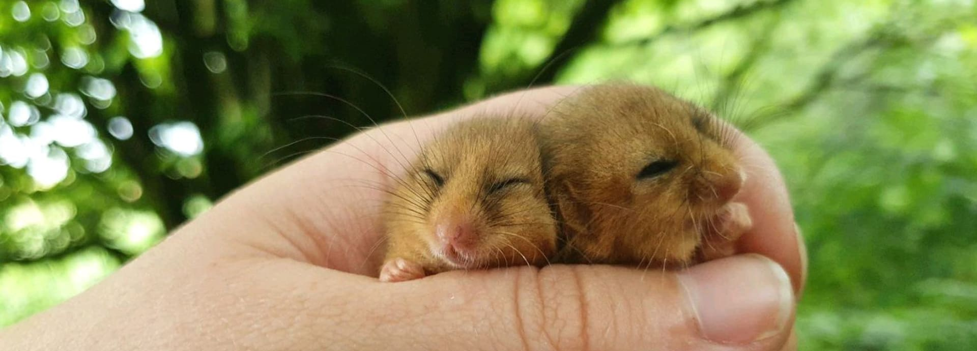Dormouse surveys September 2020