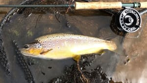 SW Lakes Weekly Trout Fishery Round Up - W/E 11 April