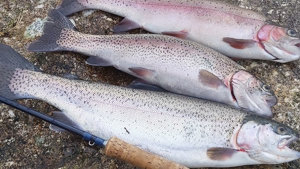 SW Lakes Weekly Trout Fishery Round Up - W/E 7 March 2021