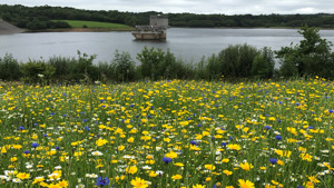 Wildflower spectacle at Roadford Lake
