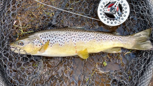 SW Lakes Weekly Trout Fisheries Round Up - W/E 9 May